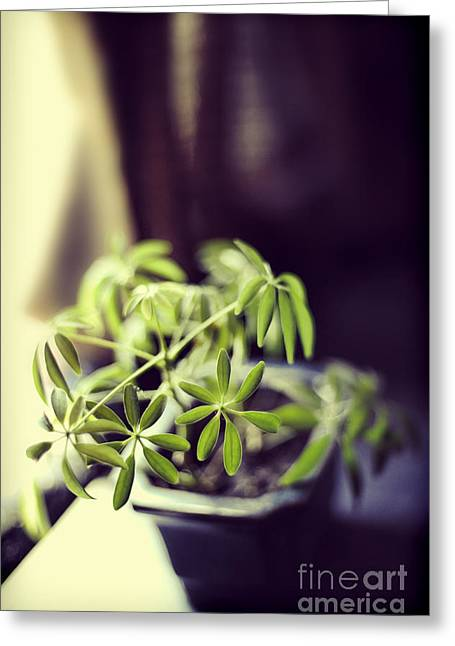 Houseplant Greeting Card by HD Connelly