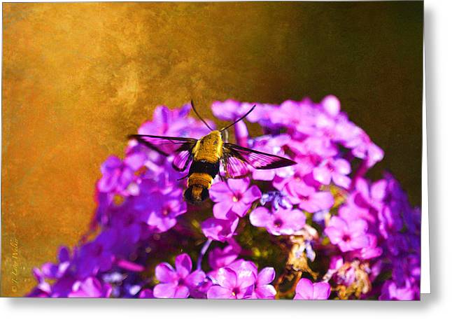 Hovering Clearwing Greeting Card