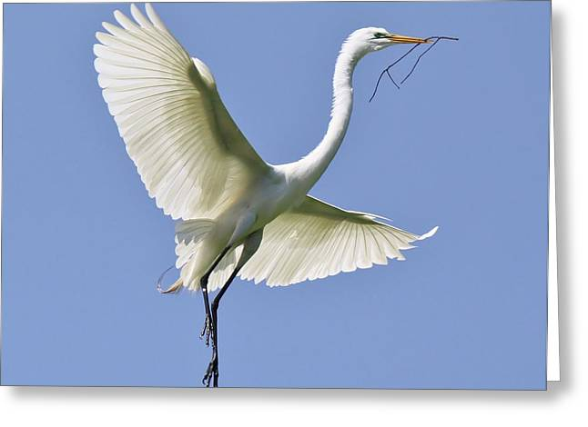 Hovering Greeting Card by Paulette Thomas