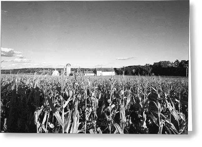 How Corny Greeting Card by Jan W Faul