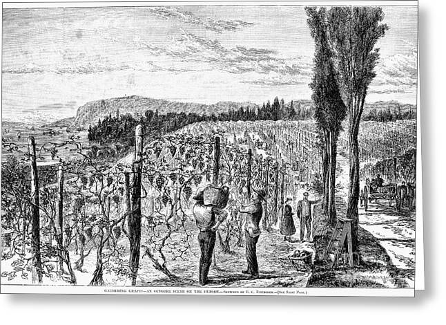 Hudson River Vineyard, 1867 Greeting Card
