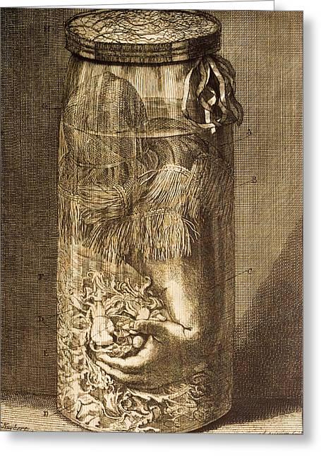 Human Arm In A Jar Greeting Card by Mehau Kulyk