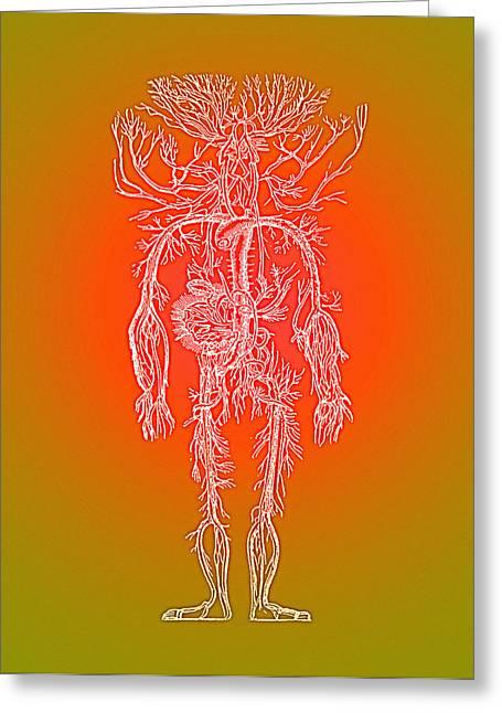 Human Blood Vessels Greeting Card by Mehau Kulyk