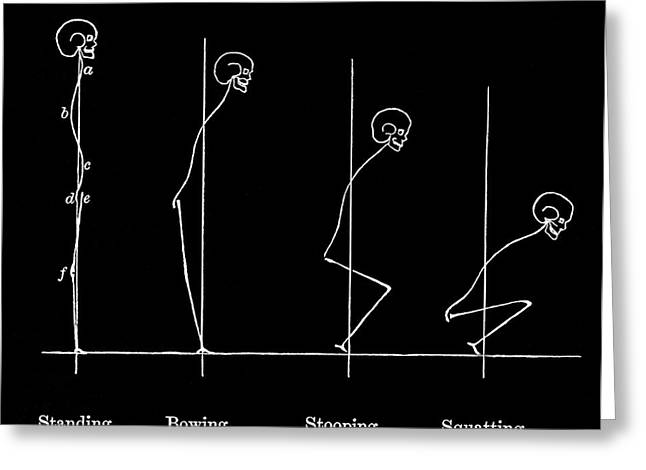 Human Body Postures, Historical Artwork Greeting Card by Sheila Terry