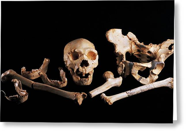 Human Fossils, Sima De Los Huesos Greeting Card by Javier Truebamsf