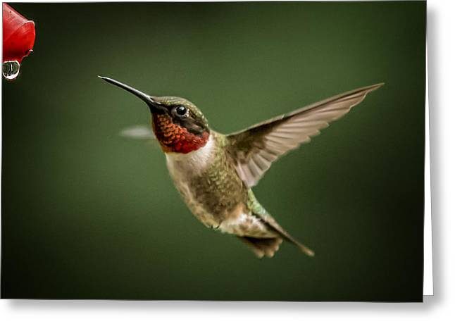 Hummer In The Garden One Greeting Card by Michael Putnam