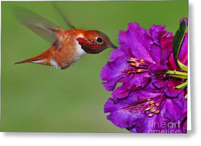 Hummer N Blooms Greeting Card