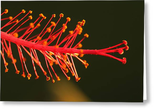 Hummers Delight Greeting Card