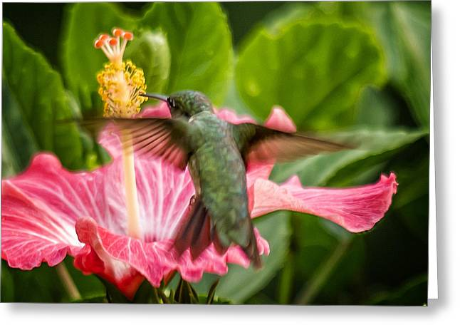 Hummers In The Garden Five Greeting Card by Michael Putnam