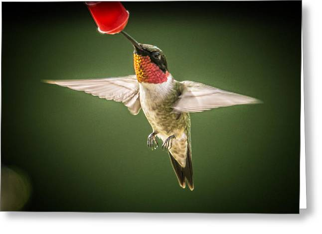 Hummers In The Garden Four Greeting Card by Michael Putnam