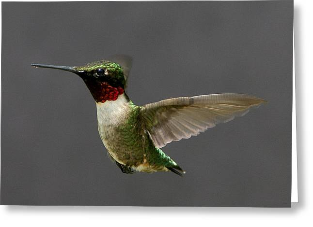 Greeting Card featuring the photograph Hummingbird 1 by John Crothers