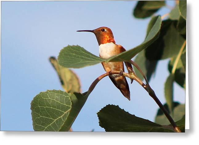 Hummingbird 11 Greeting Card