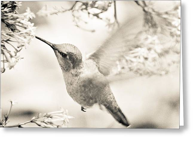Greeting Card featuring the photograph Hummingbird At The Valerian by Ronda Broatch