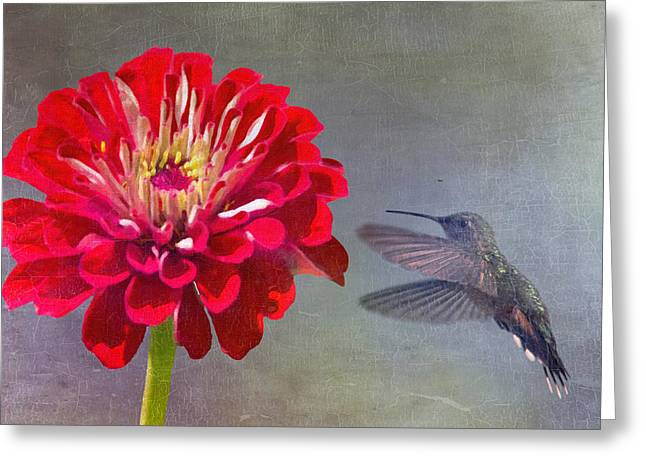 Hummingbird Dance Greeting Card by Daphne Sampson