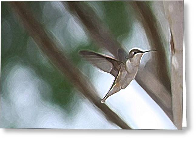 Greeting Card featuring the photograph Hummingbird by Donna  Smith