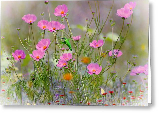 Hummingbird In The Cosmos Greeting Card by John  Kolenberg