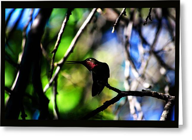 Greeting Card featuring the photograph Hummingbird Resting On A Twig by Susanne Still