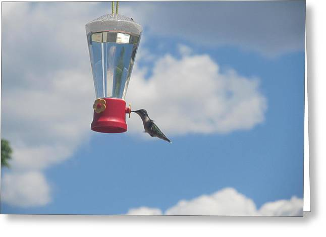 Greeting Card featuring the photograph Just A Hummingbird by Tina M Wenger