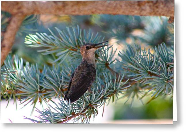 Hummingbird's First Flight Greeting Card