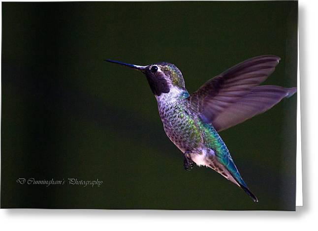 Hummingbird's Visit Greeting Card by Dorothy Cunningham