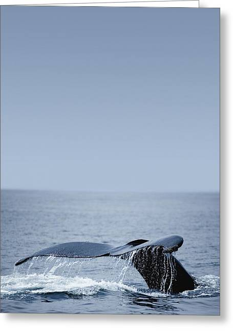 Humpback Whale Tail Fin Greeting Card by Darren Greenwood