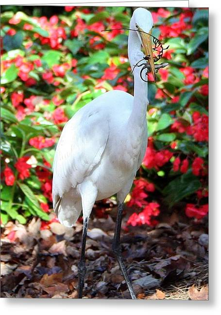 Hungry Egret  Greeting Card