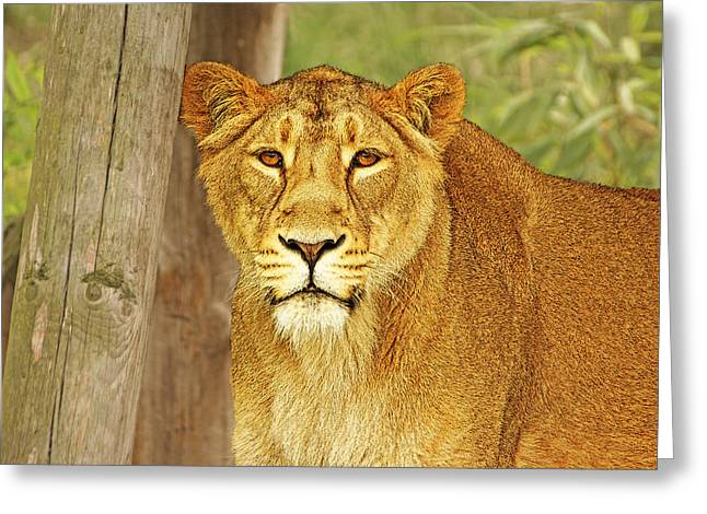 Hungry Eyes Greeting Card by Michael Ambrose