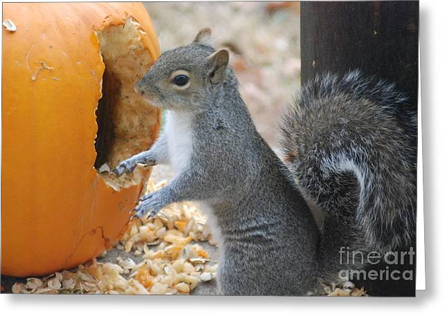 Greeting Card featuring the photograph Hungry Squirrel by Mark McReynolds