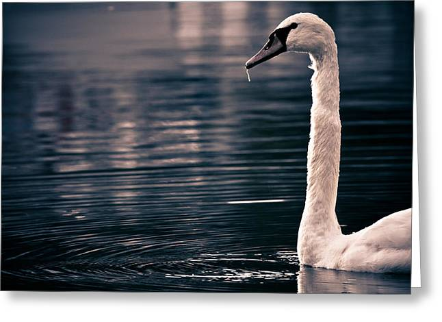 Greeting Card featuring the photograph Hungry Swan by Justin Albrecht