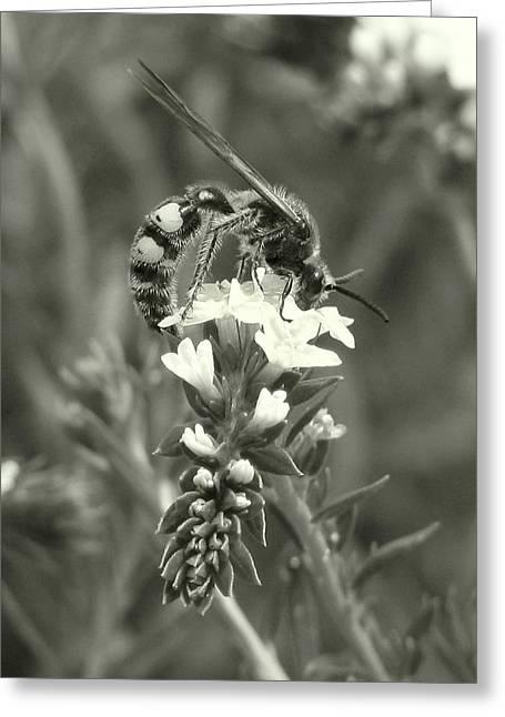 Hunter Wasp On Heliotrope Greeting Card