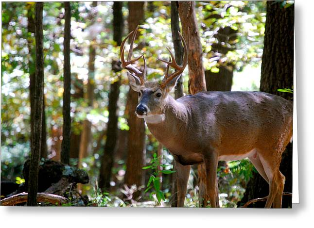 Greeting Card featuring the photograph Hunters Dream 10 Point Buck by Peggy Franz