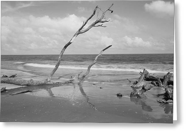 Hunting Island State Park Greeting Card by Donnie Smith