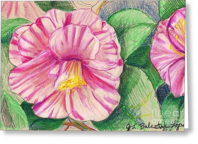 Hybiscus Pink And White Greeting Card by Jamey Balester