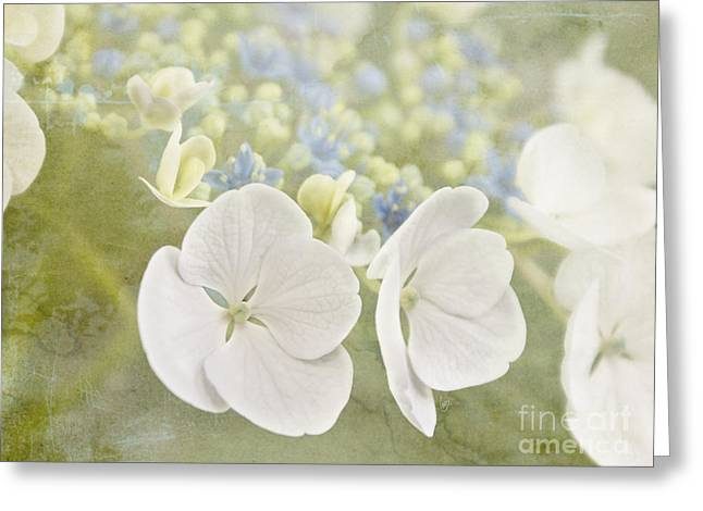 Hydrangea Dreams Greeting Card
