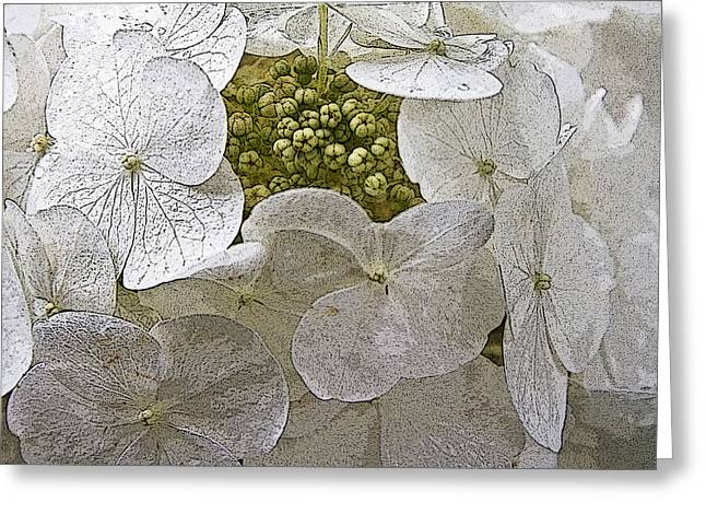 Greeting Card featuring the photograph Hydrangea by Michael Friedman
