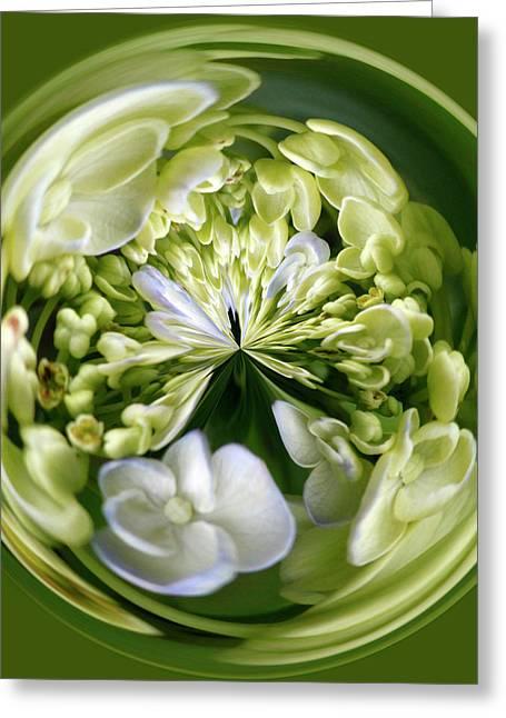 Hydrangea Orb Greeting Card