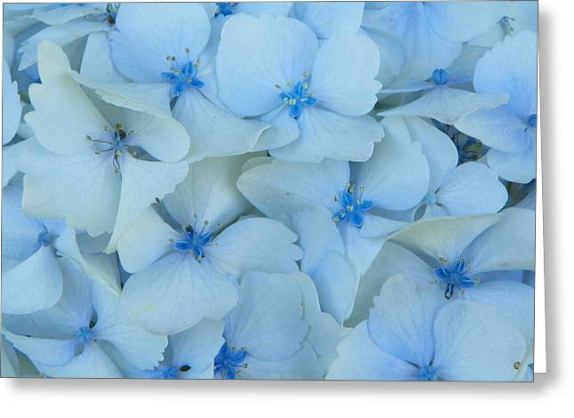 Hydrangeas Hortensias Greeting Card