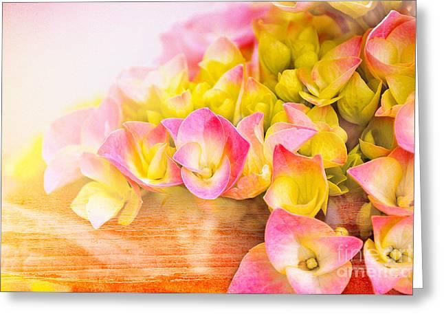 Hydrangeas In Bloom Greeting Card by Elaine Manley