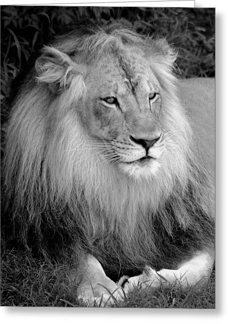 Greeting Card featuring the photograph I Am King by Renee Hardison