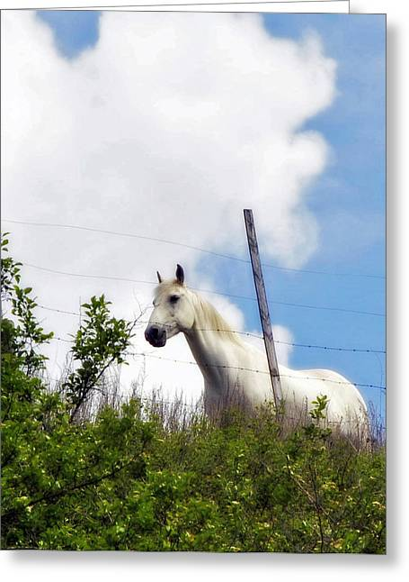 I Dreamt Of A White Horse Greeting Card