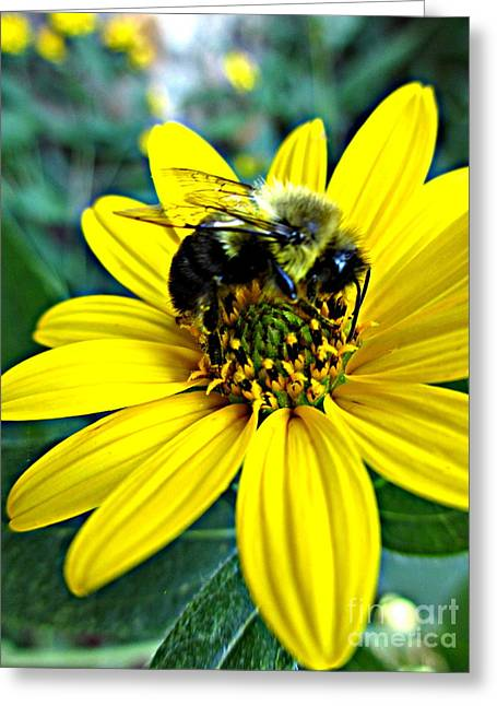 I Love Pollen Greeting Card by Maria Scarfone