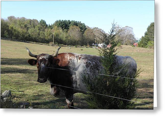 I Rule The Farm Greeting Card by Kim Galluzzo Wozniak