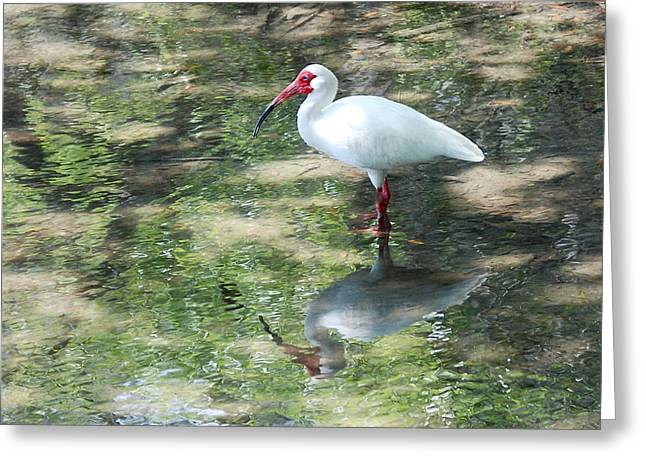 I Stand Alone Greeting Card by Kathy Gibbons