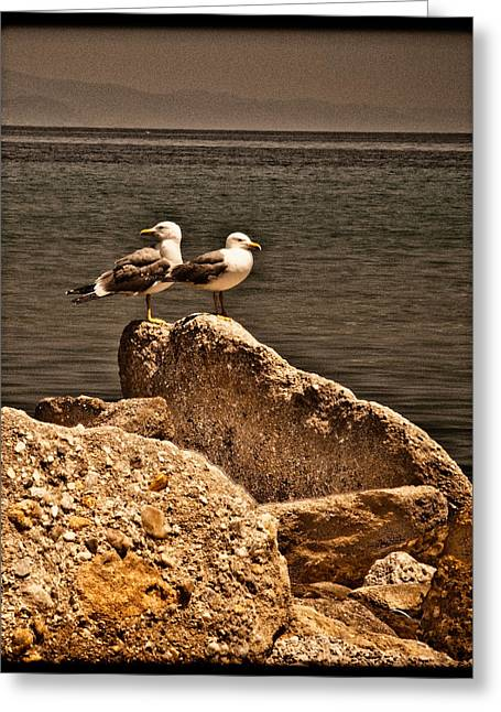Afitos, Greece - I Think We're Alone ... Greeting Card