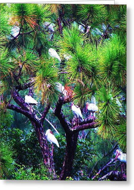 Greeting Card featuring the photograph Ibis-gone To Roost-2 by Joy Braverman