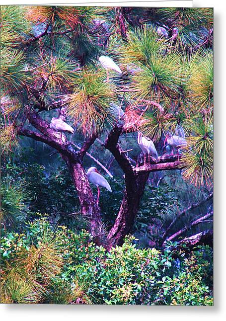 Greeting Card featuring the photograph Ibis-gone To Roost by Joy Braverman