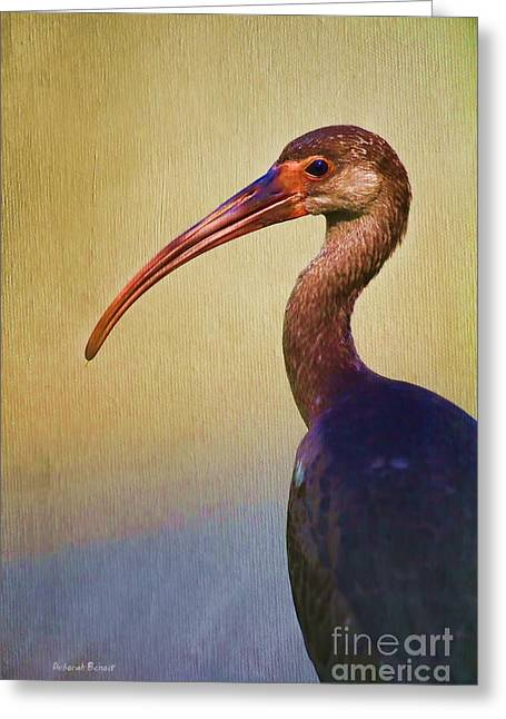 Ibis Nature Pose Greeting Card by Deborah Benoit