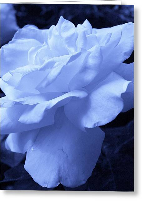 Ice Blue Rose Greeting Card by Bruce Bley