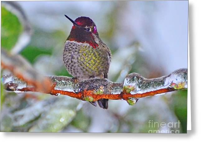 Greeting Card featuring the photograph Ice Cold Hummer by Jack Moskovita