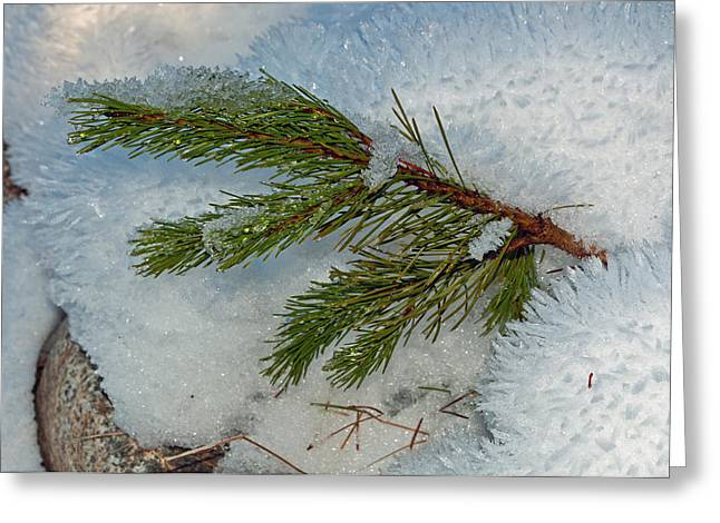 Ice Crystals And Pine Needles Greeting Card by Tikvah's Hope